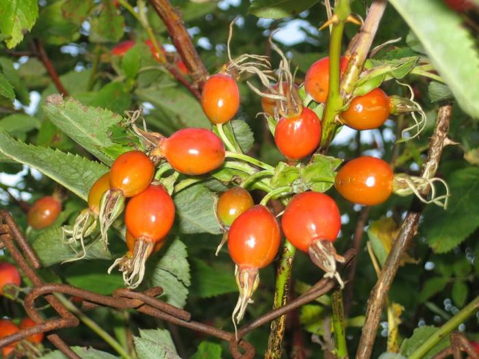 фруктово-ягодное настроение 28742