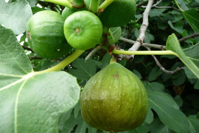 фруктово-ягодное настроение 71011