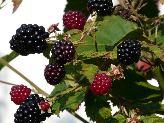 фруктово-ягодное настроение 23537
