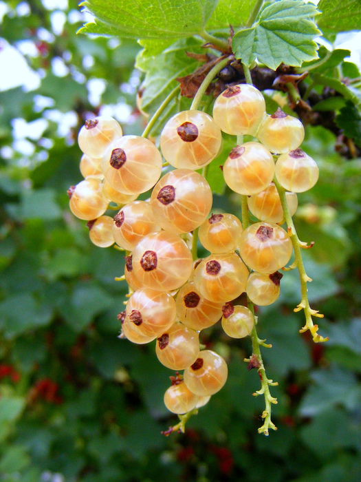 фруктово-ягодное настроение 23919
