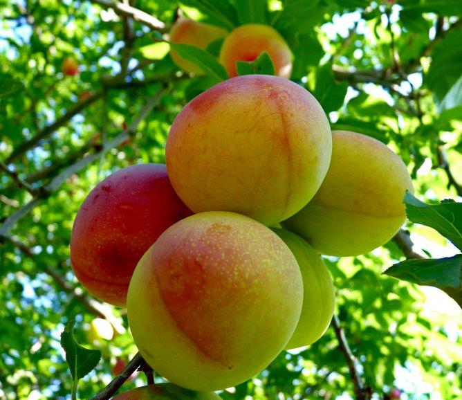 фруктово-ягодное настроение 15367