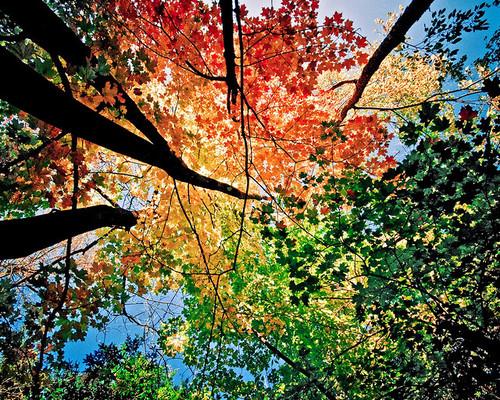 Красота времен года