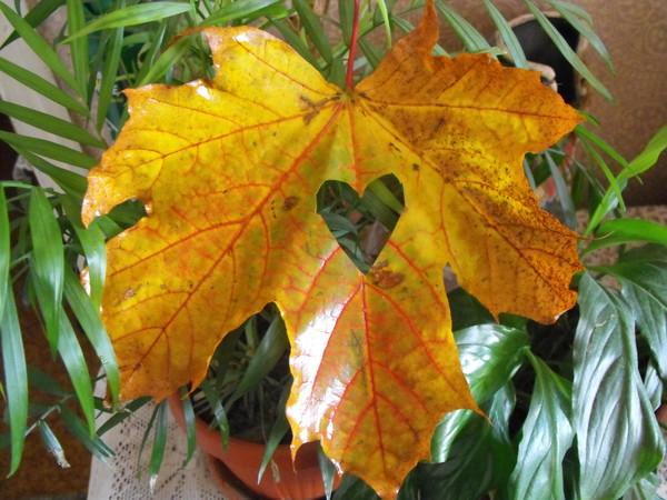 Осень осень…ты прекрасна