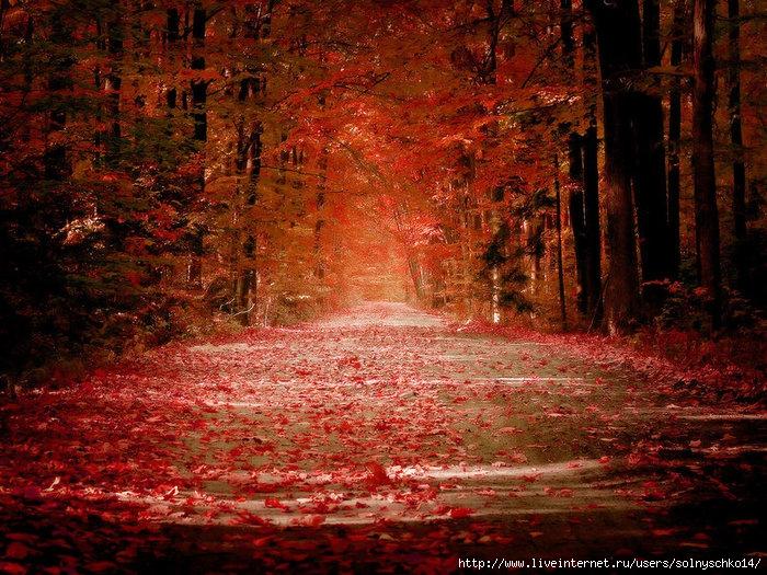 3099489_1222257922_Autumn_by_sican (700x525, 378Kb)