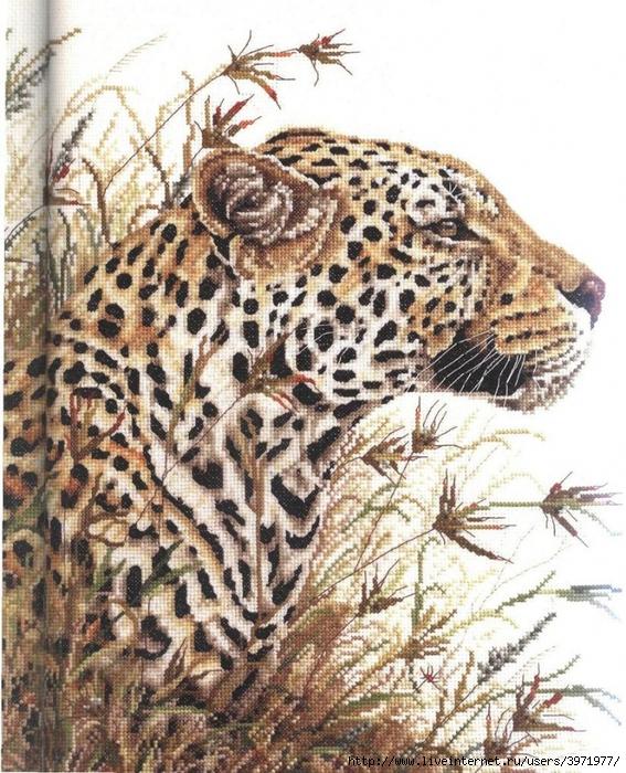 3971977_567800001065_Leopard_Safari_pic (567x700, 400Kb)