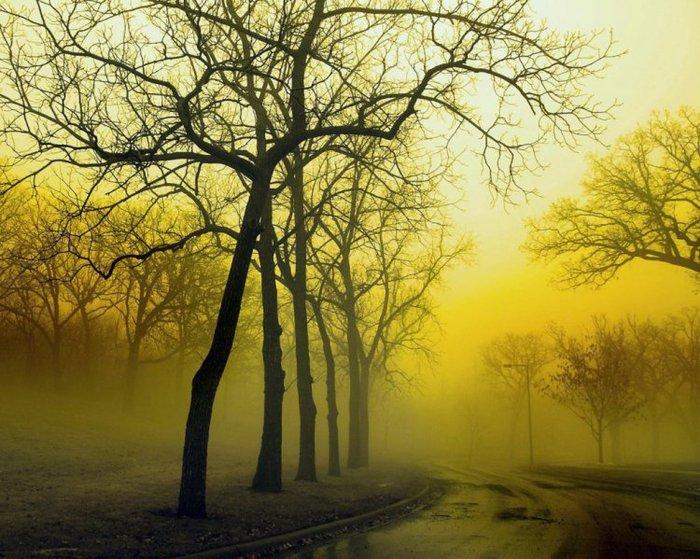 туман желтый_autumn_1-10 (700x559, 110Kb)
