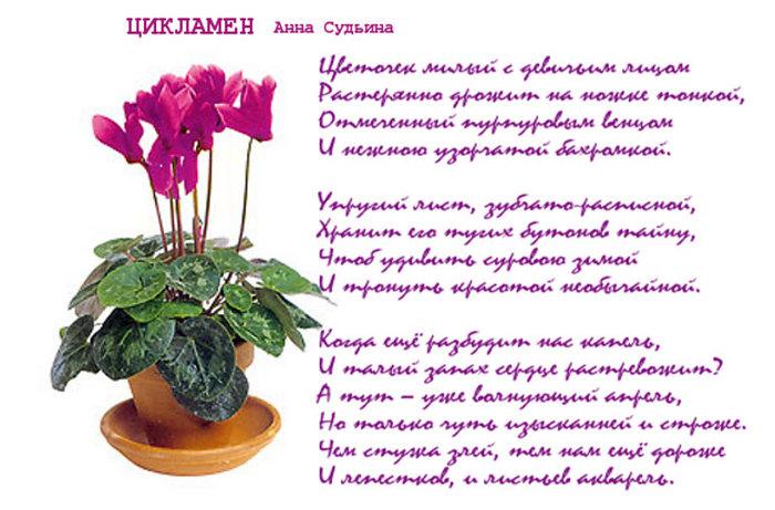 Стихи к подарку комнатный цветок 92