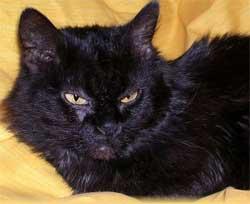 cat (250x204, 6Kb)
