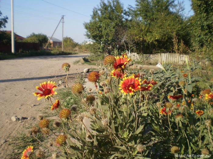 цветы (700x525, 326Kb)