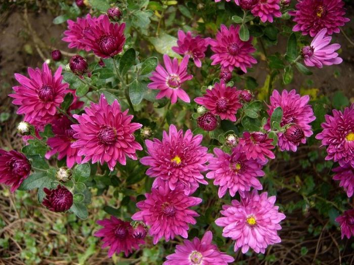 цветы (700x525, 136Kb)