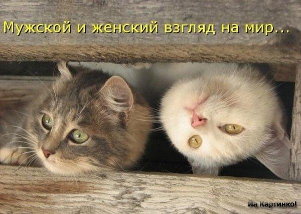 1221673896_prikolnye-foto-kotov-12 (600x428, 55Kb)