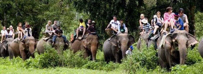 Таиланд слоны/2741434_22 (694x254, 53Kb)