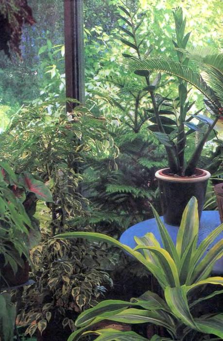 Комнатные растения. Иллюстрированная энциклопедия_6 (459x700, 157Kb)