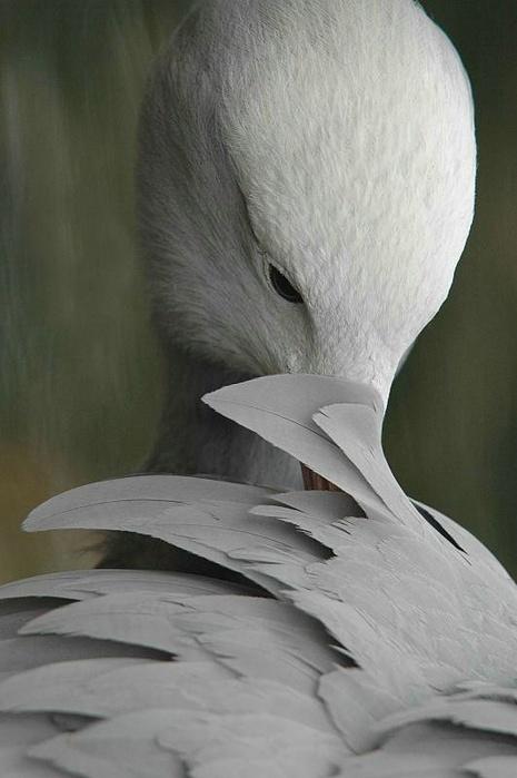 В подборку вошли фотографии птиц собранных по всему свету.