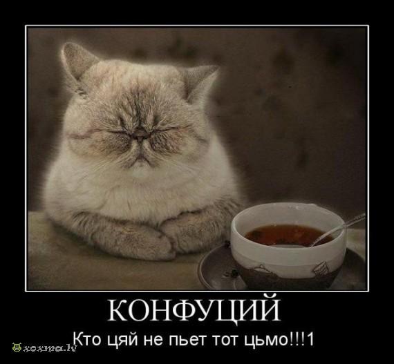 КОНФУЦЫЙ !!! (570x527, 52Kb)