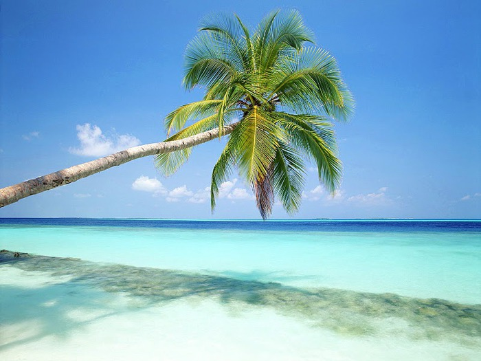 Tropical Island, Maldives (700x525, 93Kb)