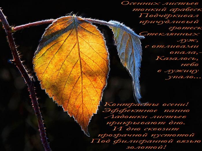 осень стих красиво (700x522, 174Kb)