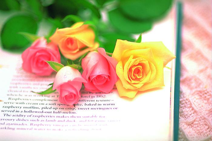 Цветы картинки со стихами 1