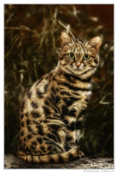 пёстрый котенок (478x699, 130Kb)