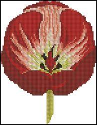 3937664_DMCFlowersFleurs_Tulip (195x250, 13Kb)