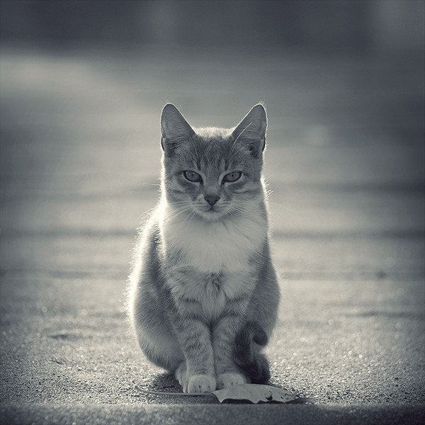 Budda_Cat_by_leenik (600x600, 76Kb)