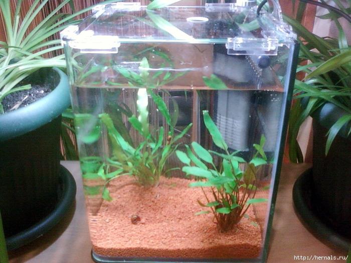 аквариум без рыб