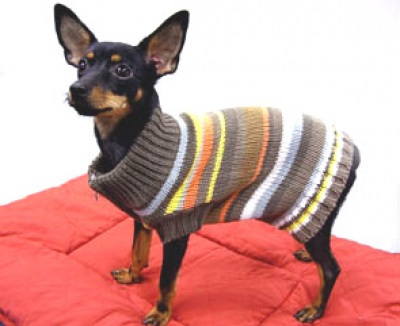 Вязаная одежда для собак.