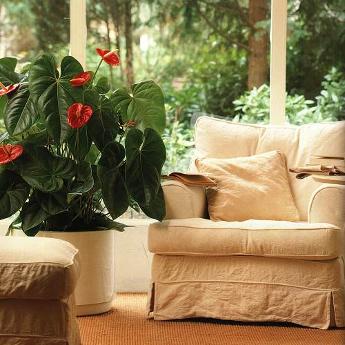 комнатные цветы (500x500, 45Kb)