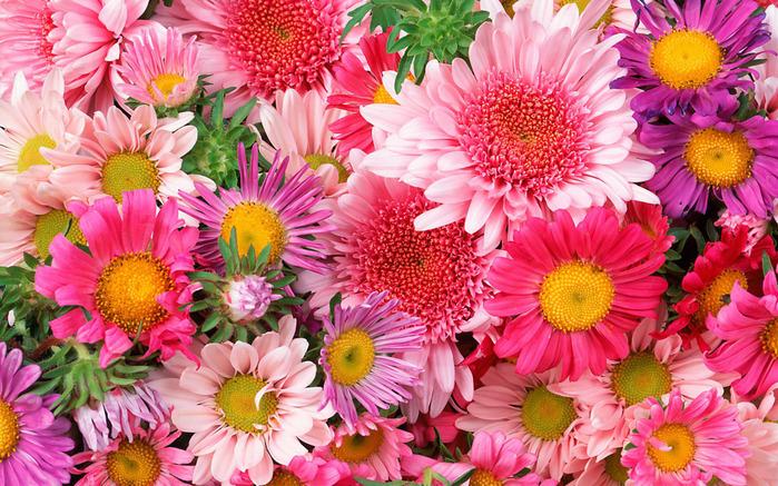 1239709480_flower_45 (700x437, 223Kb)