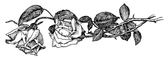 roses003 (700x246, 74Kb)
