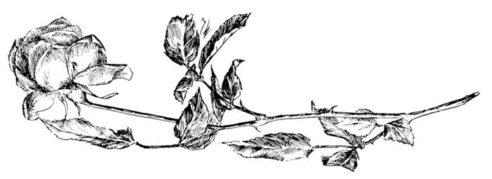 roses022 (700x255, 118Kb)