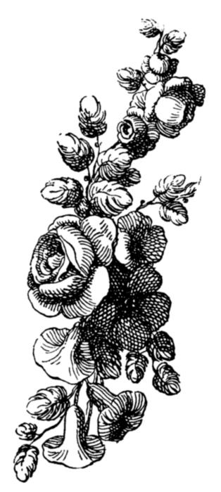 roses080 (314x700, 102Kb)