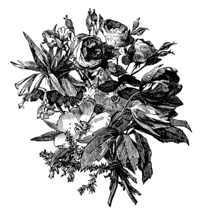 roses082 (665x700, 222Kb)