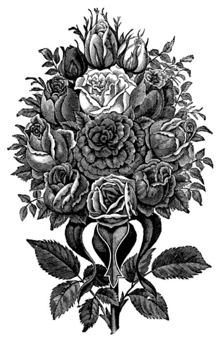 roses084 (451x700, 196Kb)