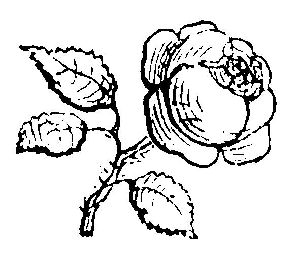 roses085 (577x511, 16Kb)