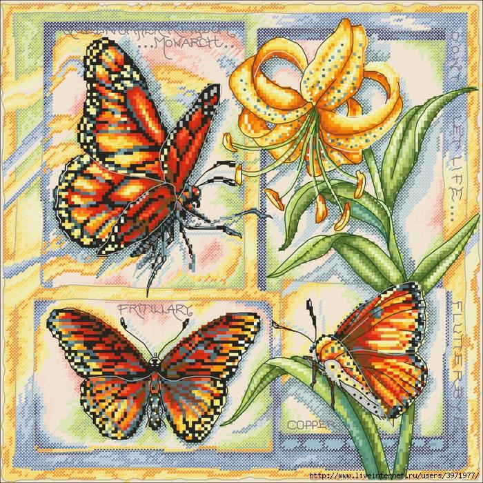 3971977_Butterflies_4_033 (700x700, 639Kb)