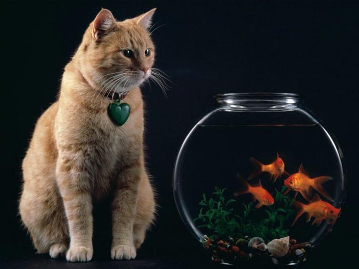 фото кот с рыбками (700x525, 88Kb)