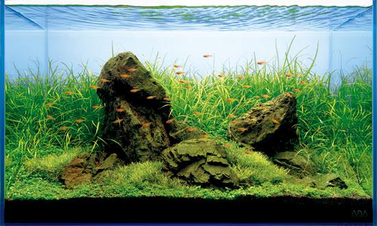 рыбки аква из Акважурнал (550x330, 78Kb)
