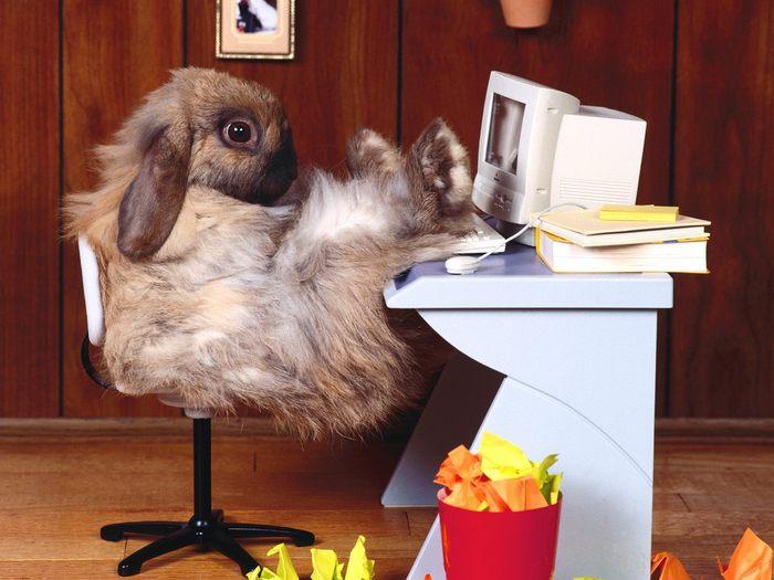 кролик за компом - пятница/1318199201_44krolik_za_kompom (700x525, 60Kb)