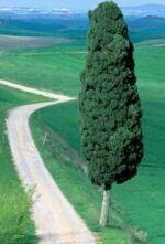 дорога и дерево (150x221, 7Kb)