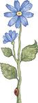 Превью Daisy_Blue02 (217x576, 39Kb)
