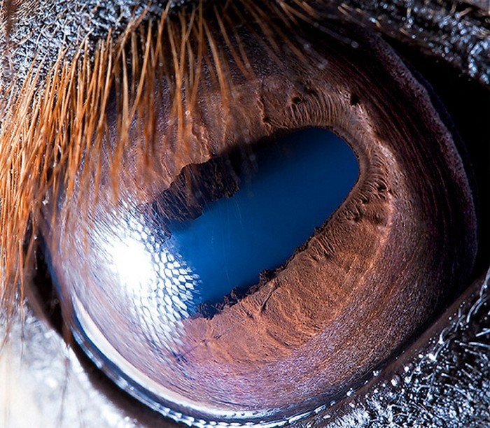 horse_eye_4 (700x612, 165Kb)