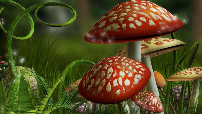 mushrooms-wallpaper-1366x768 (700x393, 127Kb)