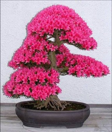 1267106079_bloomingbonsai06 (382x450, 49Kb)