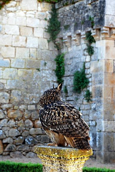 замок в Миланде (Chateau des Milandes). 54210