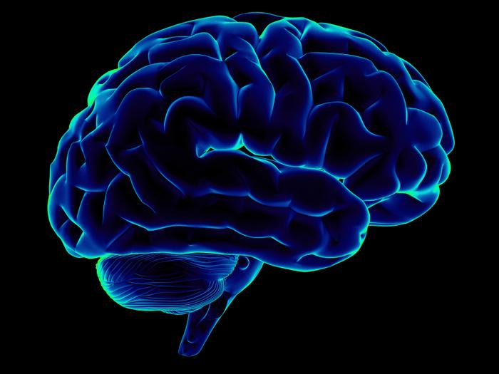 4387736_brain (700x525, 267Kb)