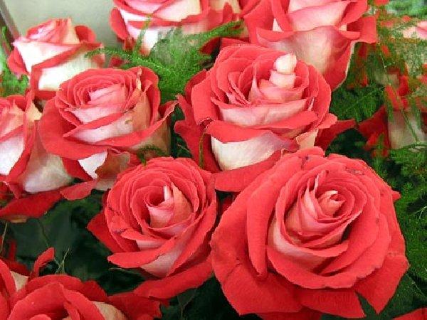 розы букет (600x450, 66Kb)