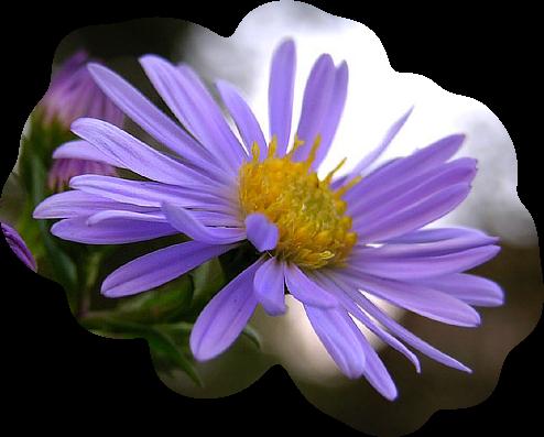 3949503_fleur_84 (494x397, 266Kb)