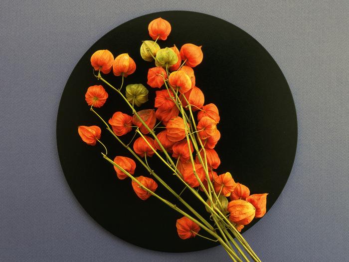 1244396728_flower_139 (700x525, 143Kb)