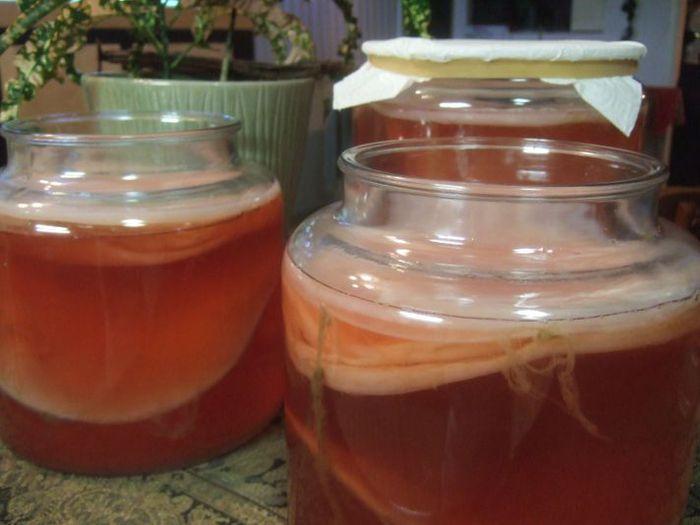 7Чайный гриб приготовление, чайный гриб уход, как вырастить чайный.